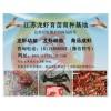 成品虾价格|供应各种规格成品龙虾