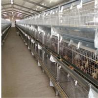 中州牧业育雏笼养设备厂家定制