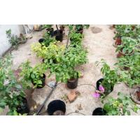 灌溉用塑料容器加工